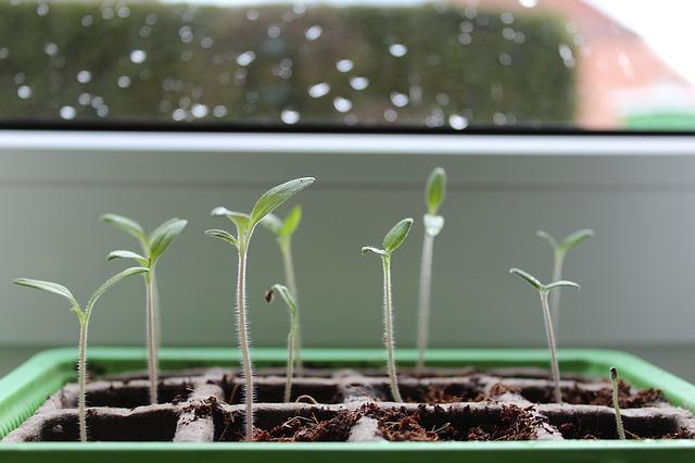 Zahradničení na balkonech a za okny