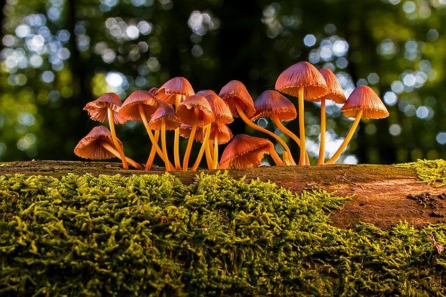 lesní houby na kmeni