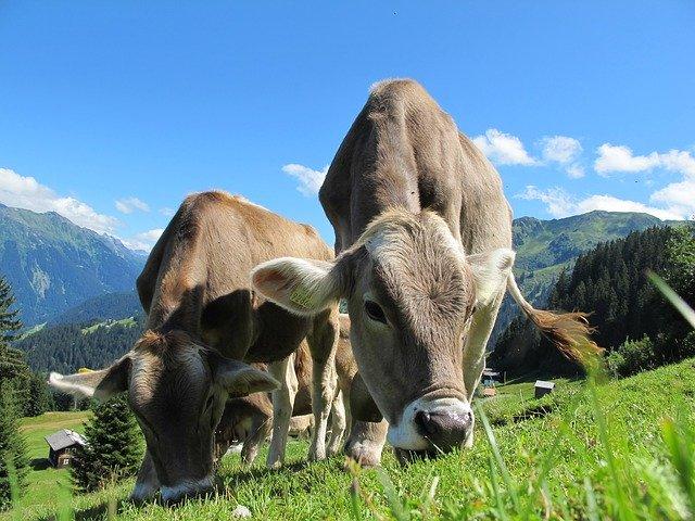 Je vegetariánství skutečně přínosné?